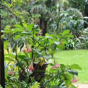 Swan-Lake-Gardens-img (106)