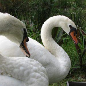 Swan-Lake-Gardens-img (87)